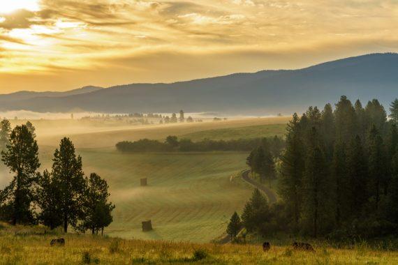 fog,sunrise,rural,farm